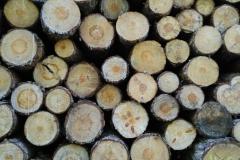 Troncs d'arbres